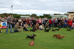 Sausage Dog Race